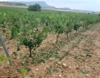 Agricultura organiza el lunes una charla informativa sobre el Pago Básico