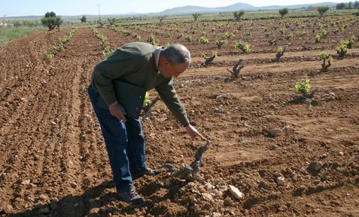 La agricultura permite que el paro baje en Yecla durante enero