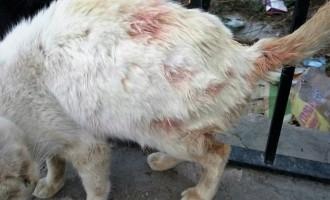 El PSOE pide que se aplique con contundencia la ordenanza sobre tenencia de animales
