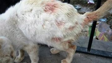 gatos spandy envenenar