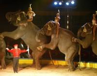 Izquierda Unida pide que Yecla se declare libre de circos con animales