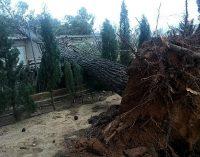 Rachas de viento de casi 100 km/h provocan caídas de árboles y cortes eléctricos