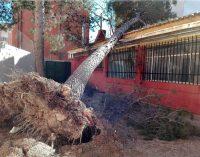 El fuerte viento provoca de nuevo caídas de árboles