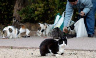 Se legaliza la alimentación controlada de las colonias de gatos