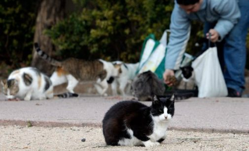 Spandy y el ayuntamiento acuerdan esterilizar a las colonias de gatos
