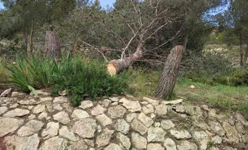 El PSOE pide explicaciones por la tala de árboles en el entorno del Yecla Valora