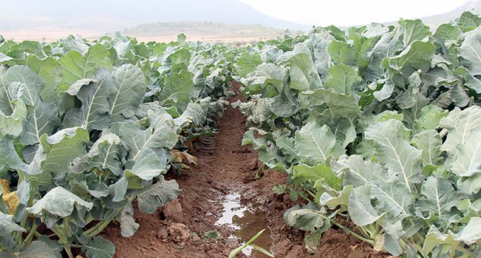 ¿Son sostenibles los cultivos intensivos en término el municipal de Yecla?