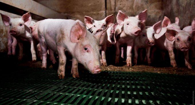 El Ayuntamiento presenta un recurso contra la granja del Arabí