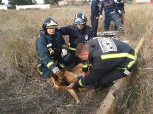 bomberos rescate perra spandy pozo