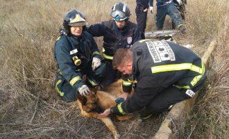 Los bomberos rescatan a una perra atrapada en un pozo