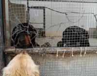Ciudadanos denuncia el estado en el que se encuentra la perrera municipal